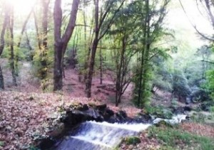 Blesberg Farm River