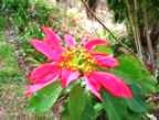 Kwela Lodge Flower